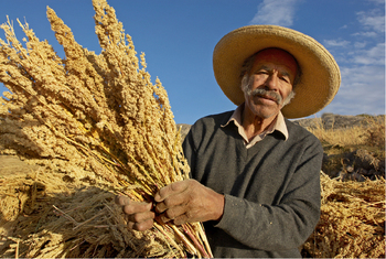 Peru. Quinoa farming is at risk due to extreme weather events. © GIZ