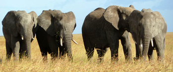tn-elefanten-serengeti-nationalpark_rdax_350x145