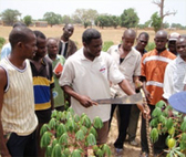 Burkina Faso. Training for improved cultivation methods in cassava production. © GIZ