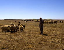 Jordan. Sustainable pasture management is one of the country's major challenges. © GIZ