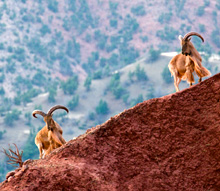 Morocco. Morocco is home to a rich range of biodiversity, ecosystems, species and genetic resources. © GIZ
