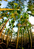 Philippines. A nursery of seedlings for planting © GIZ