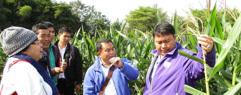 Lao representatives from the National Agriculture and Forestry Research Institute (NAFRI), the Maize and Cash crop Research Center, and provincial departments of the Ministry of Agriculture and Forestry visiting the Nakhon Sawan Field Crops Research Cente