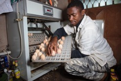 Cameroon. Employees in the poultry farming industry. © GIZ
