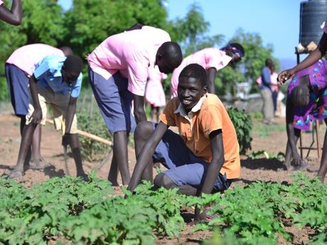 Kenya: In Kakuma and the surrounding area, vegetable gardens are being created and irrigated.