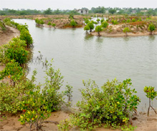 India. Integrated Mangrove Fishery Farming in Tamil Nadu  © GIZ
