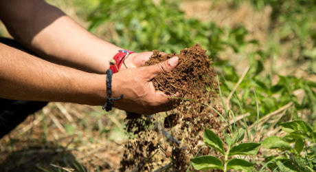 Sustainable soil use and maintenance ensure livelihoods for farmers. © GIZ/Justus Lodemann