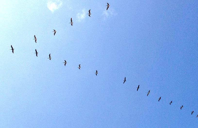 Migratory birds in the blue sky (Bild: Teng Yu / EyeEm/GettyImages)