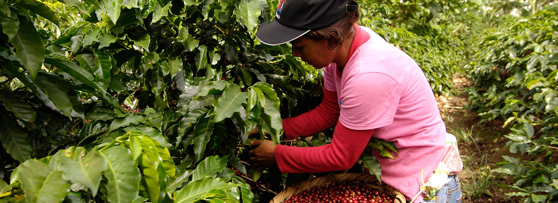 Climate-friendly coffee from Costa Rica