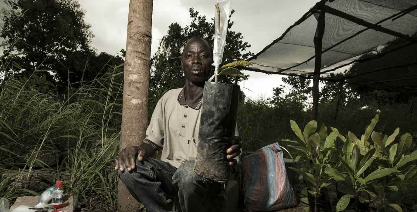 Farmer with cashew seedling